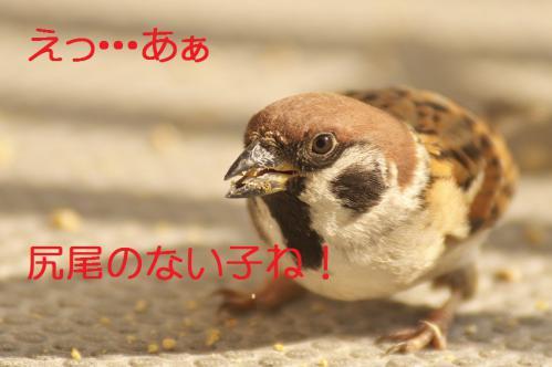 130_20130131194821.jpg