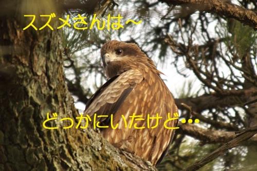 130_20140205205237e07.jpg