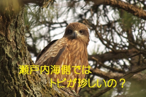 135_20140205205242362.jpg