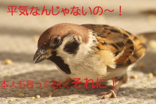 140_20130131194824.jpg