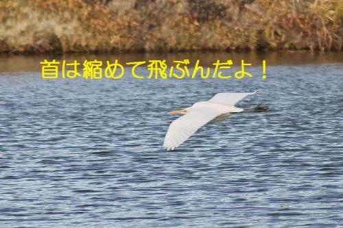 140_20140219210823d66.jpg
