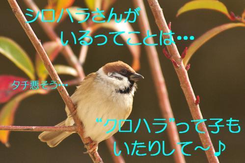 150_20130123005136.jpg