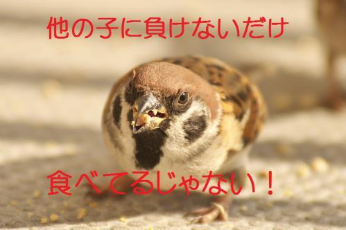 150_20130131194828.jpg