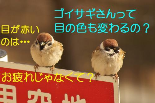 150_20130212210919.jpg