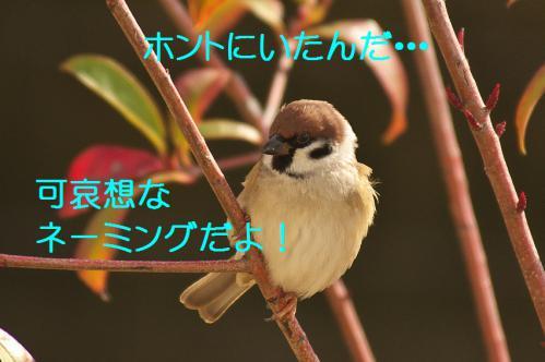 160_20130123005139.jpg