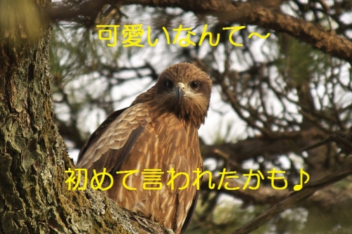 170_201402052053339ac.jpg