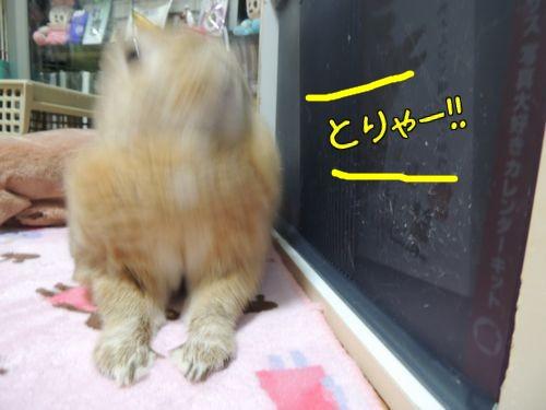 ぱぱいやばー8