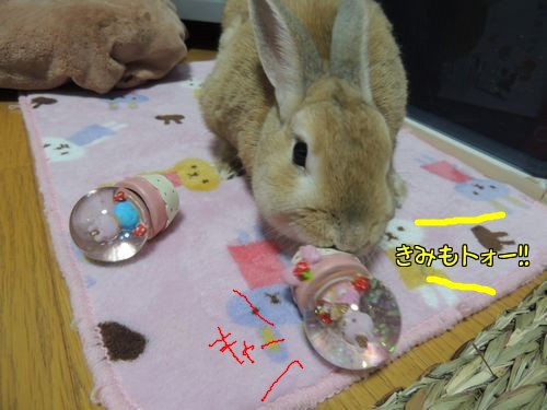 ぱぱいやばー11