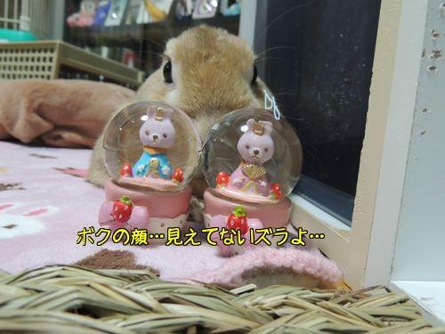 ぱぱいやばー12