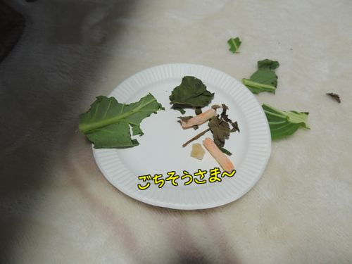 ぱぱいやばー15