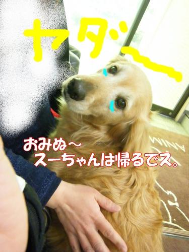 DSCF0026_20120403002321.jpg