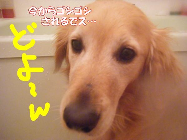 DSCF2001_20120226001841.jpg