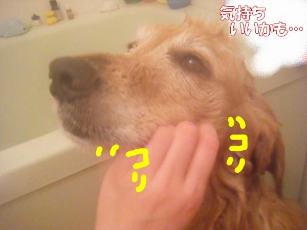 DSCF2012_20120226001838.jpg