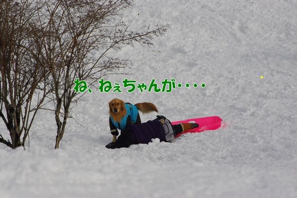 IMGP0034_20120216002305.jpg
