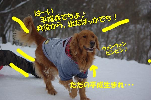 IMGP0040_20120214003123.jpg