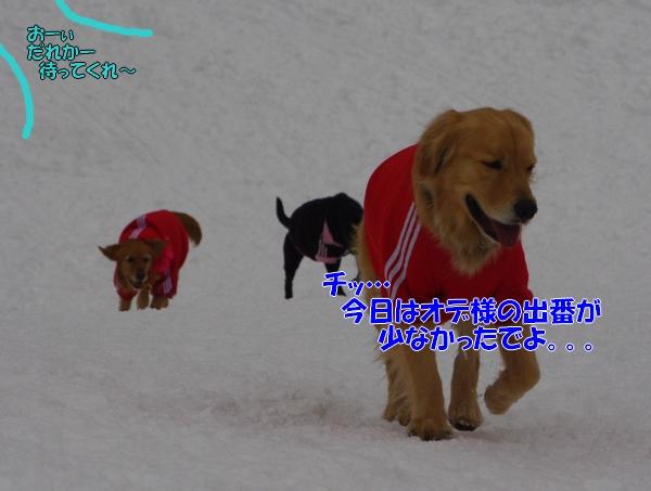 IMGP0106.jpg
