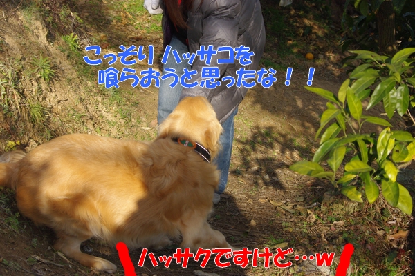 IMGP5471_20120221002240.jpg