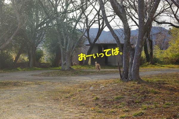 IMGP5528.jpg