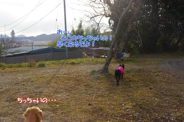 IMGP5538_20120222235811.jpg