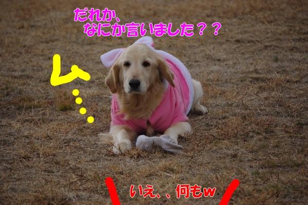 IMGP5661_20120306000908.jpg