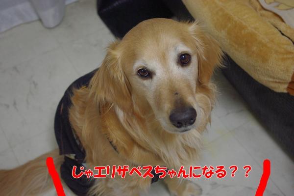 IMGP6238_20120331003009.jpg
