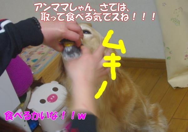 IMGP8390.jpg