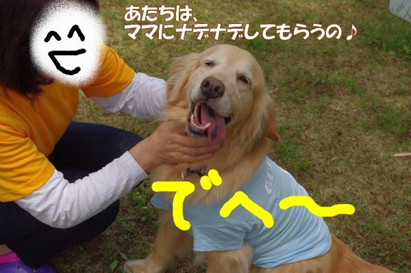 IMGP8441_20120503150516.jpg