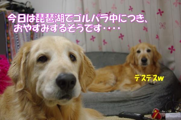 IMGP8885_20120503233336.jpg