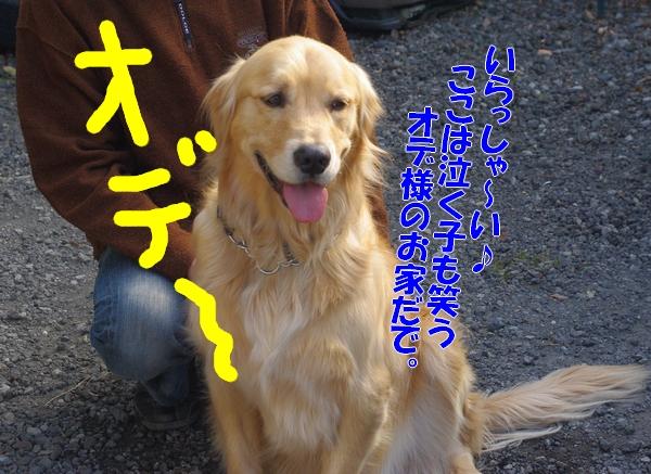 IMGP9835_20120206235456.jpg