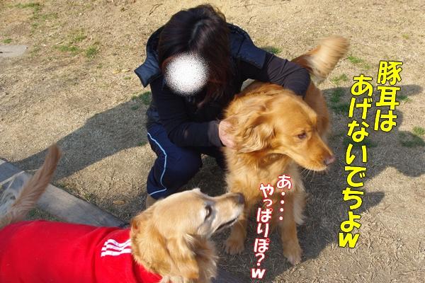 IMGP9851_20120206235741.jpg
