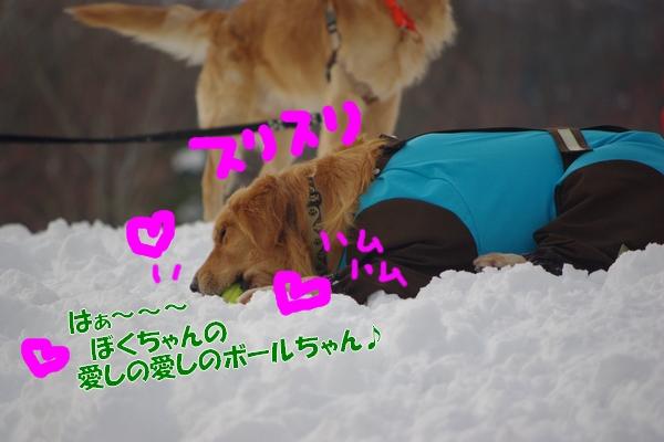 IMGP9998_20120210003201.jpg