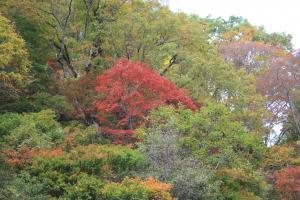 紅葉の見ごろを迎えた恵みの森