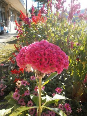 只見駅の花1