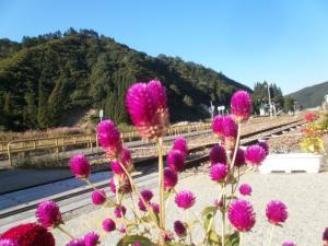 只見駅の花4