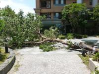 倒れた中庭の木が完全に通路ふさぐ130714