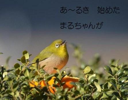 DSC_1731歌3