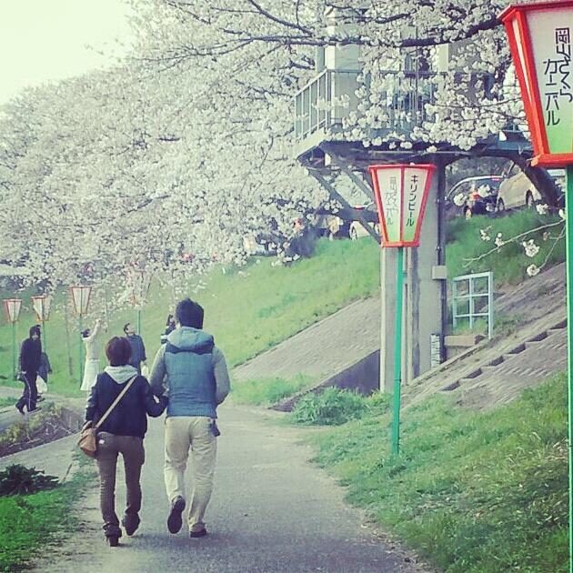 旭川河川敷の桜並木2012インスタヴァージョン