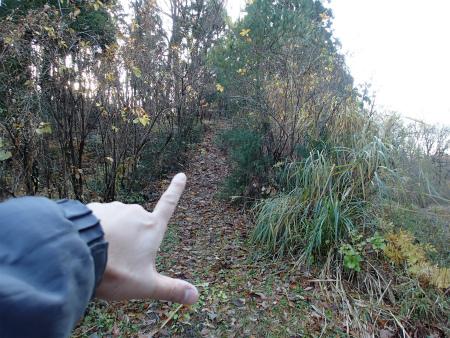 近所の某林道