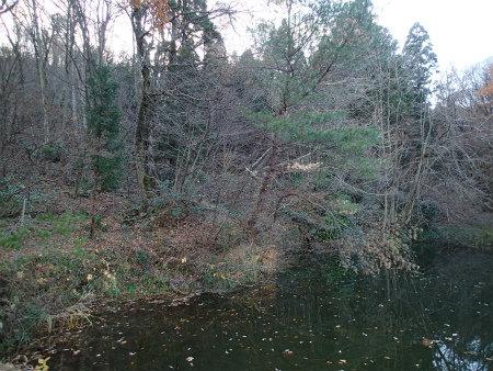 近所の某池