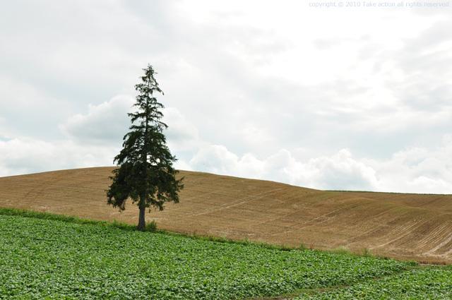 2011・8・16写真合宿2日目クリスマスの木