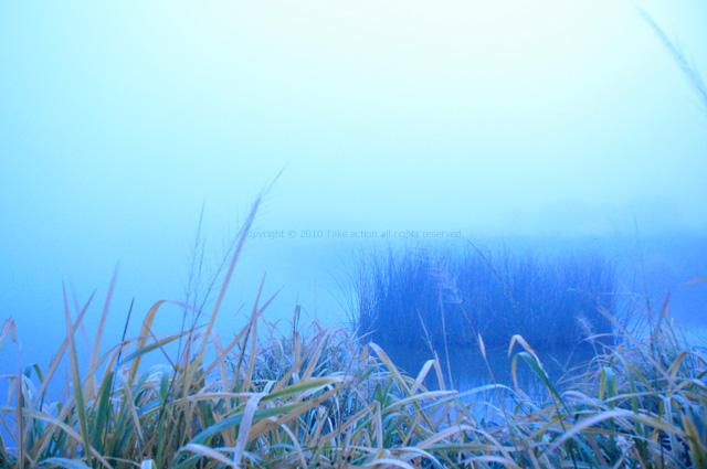 2011・10・9早朝マガン1