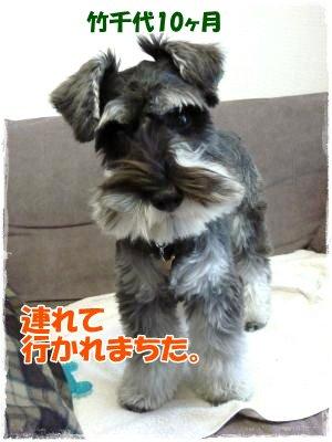 042_convert_20111117094112.jpg