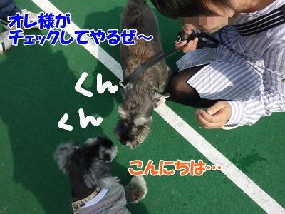 10_10+113_convert_20111010100054.jpg