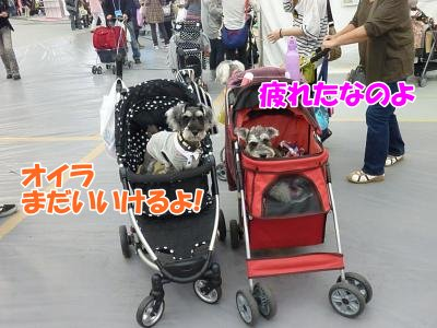10_10+146_convert_20111010100356.jpg