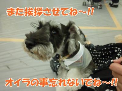 10_10+157_convert_20111010100910.jpg