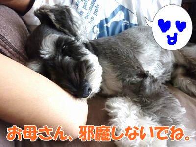 10_13+003_convert_20111014113858.jpg