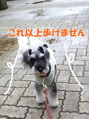 10_15+019_convert_20111015085417.jpg