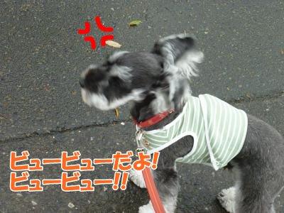 10_15+021_convert_20111015085529.jpg