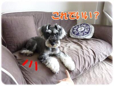 10_18+042_convert_20111018113113.jpg