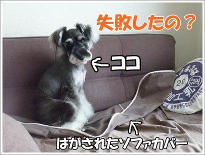 10_21+002_convert_20111020184044.jpg